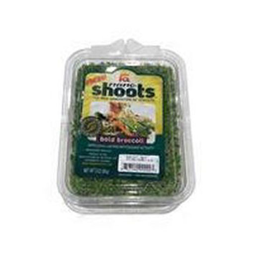 Picture of Wild About Sprouts Bold Broccoli
