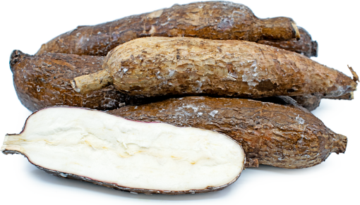 Picture of Yuca Root